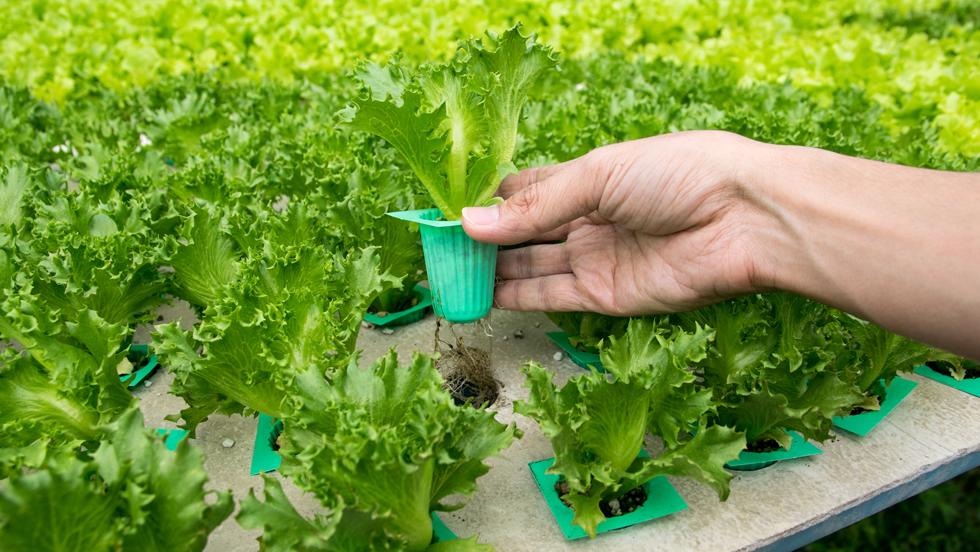 Ble Pressemitteilungen Salat Tipps Zum Lagern Und Eigenanbau